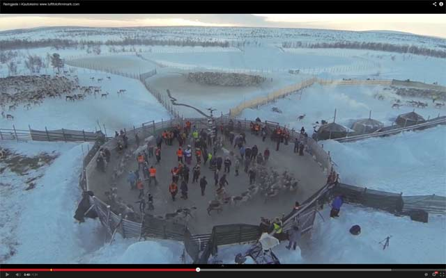 Unique Video of Reindeer Herding in Norway